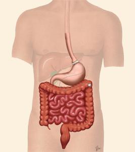lbs-anatomy