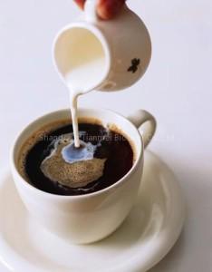 Coffee_Cream-1