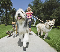 dog_walking