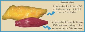 Fat-vs-Muscle-burn